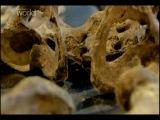 История мумий - 9 серия : Тайны солёной долины - Неизвестный моряк
